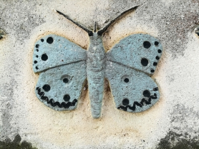 Butterfly in the nay cemetery of the city of Pula